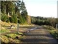 NT2841 : Logging road, Glentress Forest by Richard Webb
