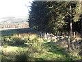 NO5898 : Edge of Braeside Wood by Stanley Howe