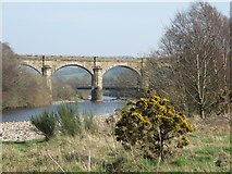 NY7063 : The River South Tyne and Alston Arches Viaduct (3) by Mike Quinn