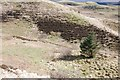 NM8705 : Solitary tree by Patrick Mackie