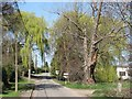 TL4151 : Harston: green willows near Willow Farm by John Sutton
