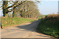 SX3158 : Cornish lane above Hessenford by roger geach