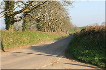 SX3158 : Cornish lane above Hessenford by roger geach