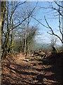 SS9014 : Bridleway near Hill Farm by David Smith