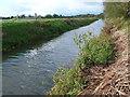 ST5532 : River Brue at Tootle Bridge Farm by Nigel Mykura