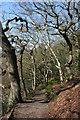 SJ5257 : Deciduous woodland on the Sandstone Trail by Espresso Addict
