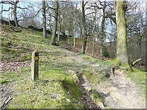 SE0022 : Footpath in Higher House Wood by Humphrey Bolton