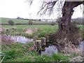 SU0725 : River Ebble, Bishopstone by Maigheach-gheal