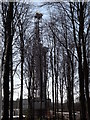 SU8815 : Woodland Tracery by Colin Smith