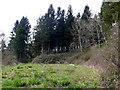 ST5108 : Pen Woods Walking Trail by Nigel Mykura