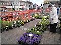 SJ9494 : Easter Pot Plants by Gerald England