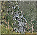 TA1974 : Puffins on Bempton Cliffs by Pauline E