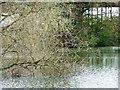 SE3944 : Nesting coot by Christine Johnstone