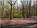 SD8204 : Woodland at Heaton Park by David Dixon