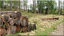 NO0245 : Wood Stack by Mick Garratt