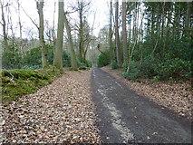 SU8429 : Mixed woodland at Shufflesheeps by Dave Spicer
