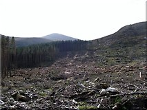 J3629 : Clear fell area on the slopes of Slievenamaddy by Eric Jones