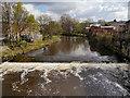 SD7933 : River Calder at Padiham by David Dixon