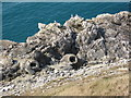 SY8379 : Fossil forest, Lulworth by Philip Halling