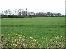 SE4169 : Farmland, Burton Moor by JThomas