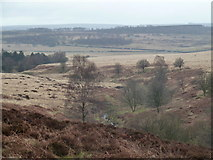 SK2775 : Bar brook valley, draining Big Moor by Andrew Hill