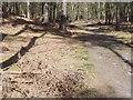 TQ0446 : Blackheath Forest by Colin Smith