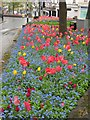 SX9164 : Flowers at Castle Circus, Torquay by Derek Harper