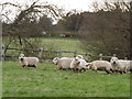 TQ0646 : Sheep by Ponds Farm by Colin Smith