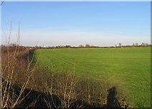 SK6514 : Field side of hedge by Andrew Tatlow
