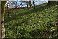 ST4916 : Bluebells, Ladies Walk, Montacute by Christopher Hilton