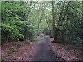 TQ4893 : Path in Spurgate Plain by Roger Jones