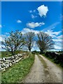 NX3842 : Footpath to the Old Place of Monreith by Andy Farrington