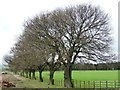 NZ1346 : Avenue of trees along the farm track by Christine Johnstone