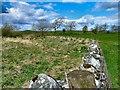 NX3843 : Boundary Wall by Andy Farrington