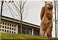 "J4781 : The ""Bear of St Gall"", Bangor by Albert Bridge"