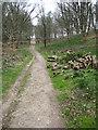 SY6087 : Footpath through Benecke Wood by Philip Halling