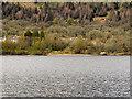 NN4709 : Loch Katrine, Northern Shore by David Dixon