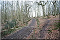 TQ6126 : Footpath in the woods by N Chadwick
