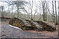TQ6126 : Log pile, Hawksden Park Wood by N Chadwick