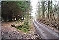 TQ6126 : Footpath goes left by N Chadwick