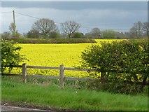 SK1515 : Corner of an oilseed rape field by Christine Johnstone