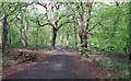 TQ4693 : Path near Roes Well by Roger Jones
