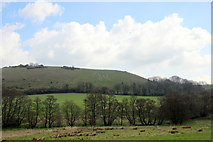 ST6601 : The Giant, Cerne Abbas, Dorset by Christine Matthews