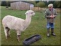 NY9369 : Me and my mate - Fallowfield Alpacas by Oliver Dixon