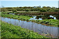 SZ5885 : Scotchells Brook, Alverstone, Isle of Wight by Peter Trimming