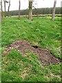 NY6167 : Badger sett at Slack House Farm by Oliver Dixon
