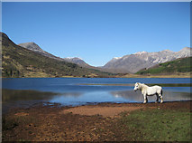 NH0155 : Highland pony at Loch Coulin by Bob Jones