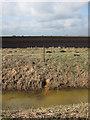 TL6590 : Field drain, Feltwell Anchor by Hugh Venables