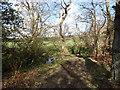 NZ0849 : Woods along the Dene Burn by Robert Graham