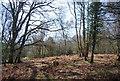 TQ4333 : Foxbury Wood by N Chadwick
